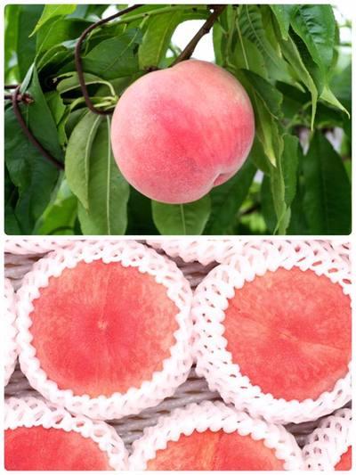 福島の恵みが育てた美味しい特上桃2kgを旬の時期にお届け。 品種は、「ゆうぞら」。  ゆうぞらは肉質が極めてち密(繊維が荒くない)で、香りも強く、食味は最上級。 外観もとても上品な晩生の品種です。 収穫したときは硬めですが、硬いうちから美味しくいただける品種です。 ゆっくり熟すため、日持ちが良いという点で、 本当に桃がお好きな方が、最後の時季にゆっくり楽しんで食べる品種です。  また、生産量が、全国で福島県が一番の品種です。 是非お楽しみください。   限定50セット