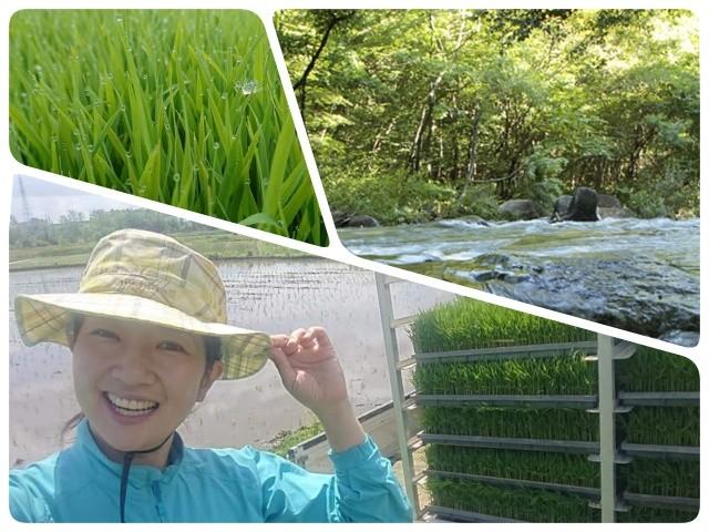 福島県西郷村は 東北の大河 阿武隈川の源流の郷です。 このキレイな水と大地で育てられた「ひとめぼれ」は冷めても美味しく、食味検査でも特Aランクに認定されています。  そんな自慢のお米をご自宅までお届けさせていただきます。  *2019年秋収穫の新米をお届けいたしますので、11月頃のお届け予定です。 *30kgずつ2回に分けて発送させていただきます。 *ご希望の場合は精米をしてお届けします(重量は90%程度となります)   【生産者である 武田永子さんより一言】  福島県西郷村の「米」と書いて「よね」と読む。 そんな場所で育ったお米です。  農薬を出来るだけ使わず、米糠などを使った自然に近い農法で育てた「ひとめぼれ」  父と母、そして私の三人で丹精込めた「ひとめぼれ」は、さっぱりとした味わいで、どんなお料理にもよく合います。