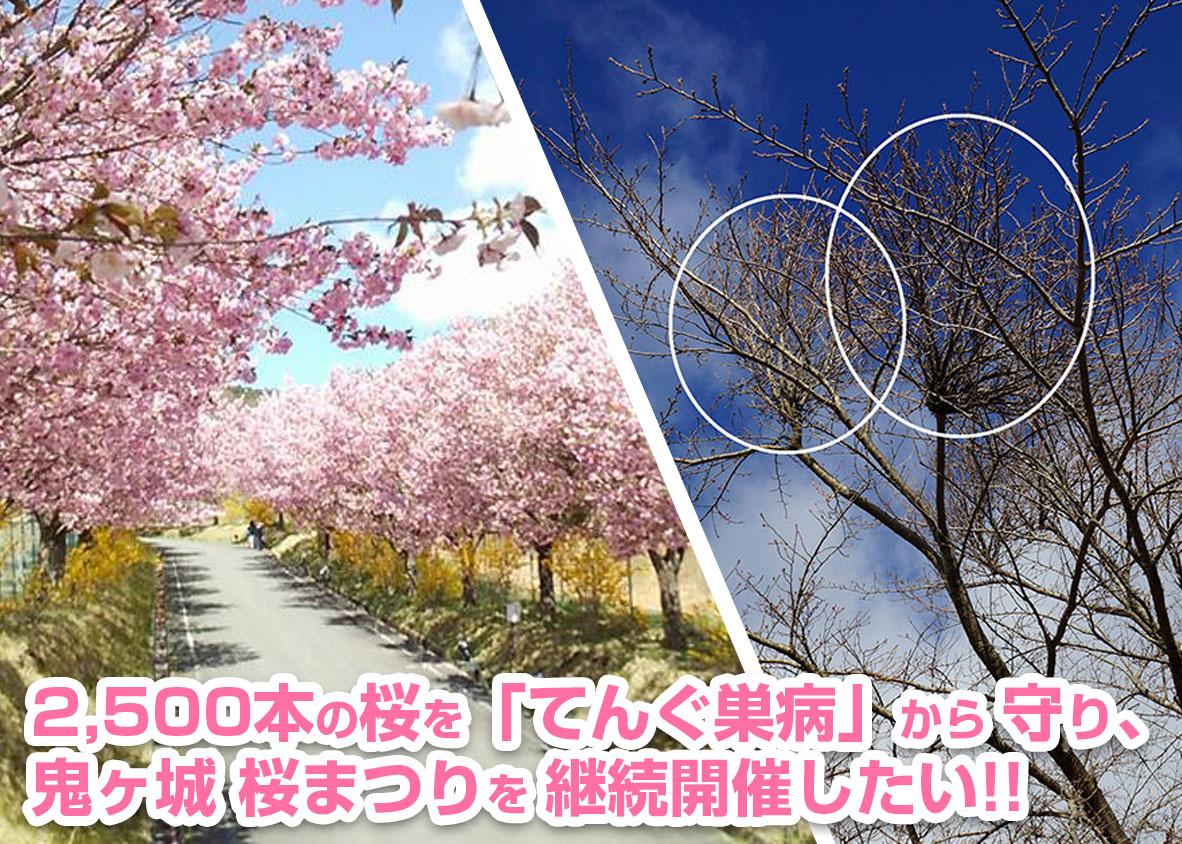 鬼ヶ城の桜をてんぐ巣病から守り、桜まつりを開催したい!!